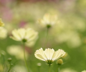 field, flower, and petals image