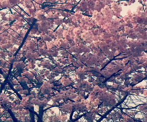 blossom, flowers, and london image