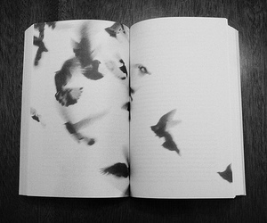 book, bird, and black and white image