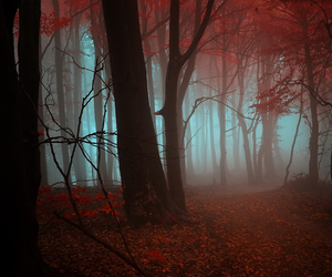 photography, forest, and nature image