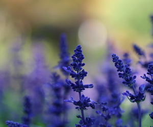 flowers, blue, and blur image