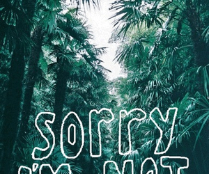sorry, sorry not sorry, and forest image