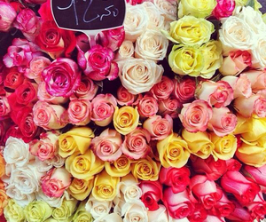 pink, roses, and yellow image