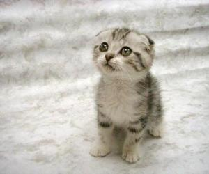 kitteh and cute image