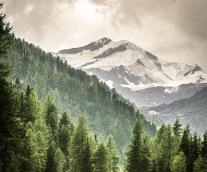 mountains and forest image