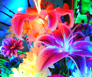 flowers, trippy, and color image