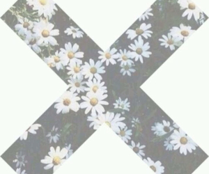 flowers, daisy, and x image