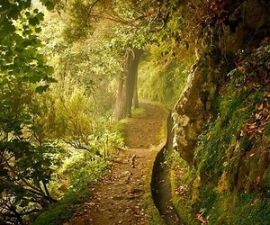 forest, nature, and green image