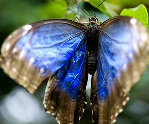 bokeh, lepidoptera, and butterfly image