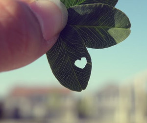 heart, love, and grees image