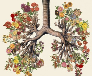 flowers, lungs, and nature image