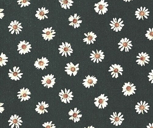 cover, daisies, and design image