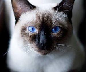 cat, animal, and cute animals image