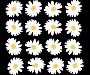 flowers, daisy, and background image