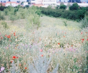 feild, flowers, and grass image