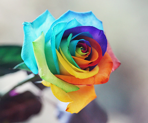 rainbow, beautiful, and flower image