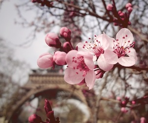 blossom, pretty, and cherryblossoms image