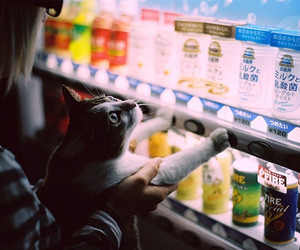 cat, display, and drinks image