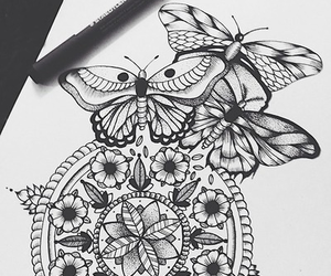 butterfly, disegni, and drawing image