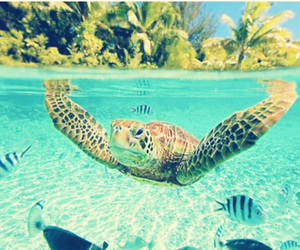 turtle, sea, and fish image
