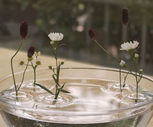floating, flowers, and nature image