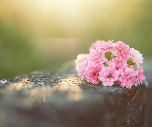 flowers, pink, and photography image