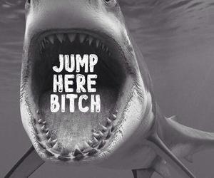 bitch, shark, and jump image