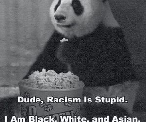 asian, racism, and bear image