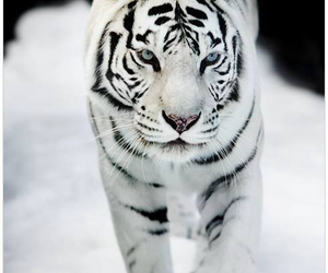 animals, white, and awesome image