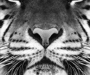 animal, freedom, and beautiful image
