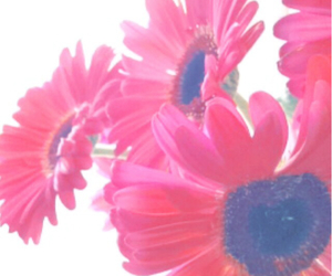 fall, flowers, and pink image