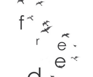 birds, freedom, and inspirational image