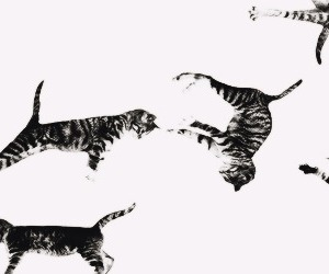 header and cats image