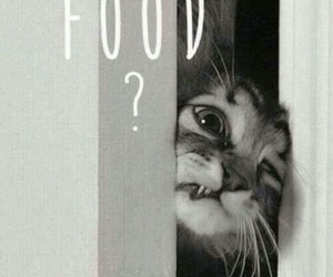 ?, adorable, and cat image