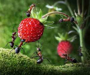 ants, fruit, and nature image