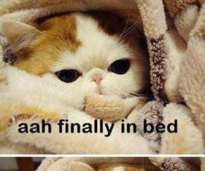 funny, bed, and cat image