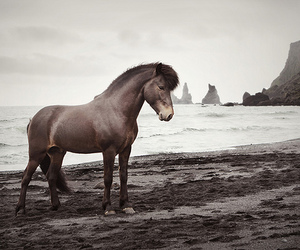 horse, beach, and nature image