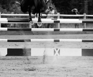 black and white, equestrian, and Flying image