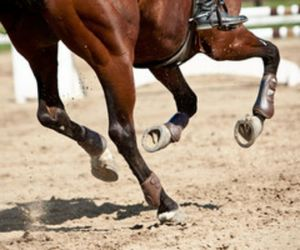 horse, equestrian, and riding image