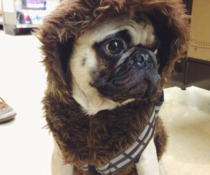 adorable, animals, and costume image