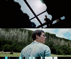 glade, maze, and newt image