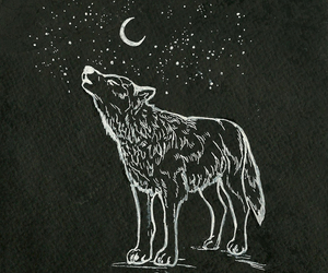 wolf, moon, and stars image