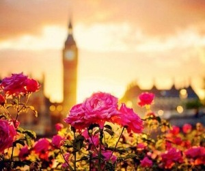 london, flowers, and rose image