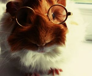 animal, cute, and glasses image