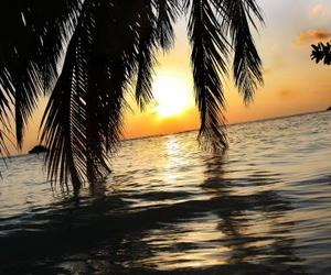 exotic, palms, and Island image