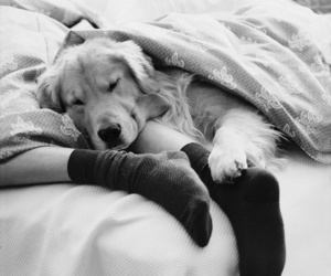dog, bed, and animal image