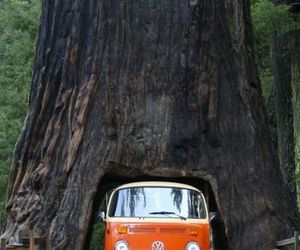 tree, car, and nature image