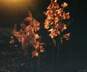 35mm, grain, and kodak image