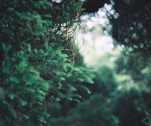green, nature, and tree image