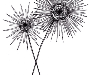 drawing, line, and flowers image
